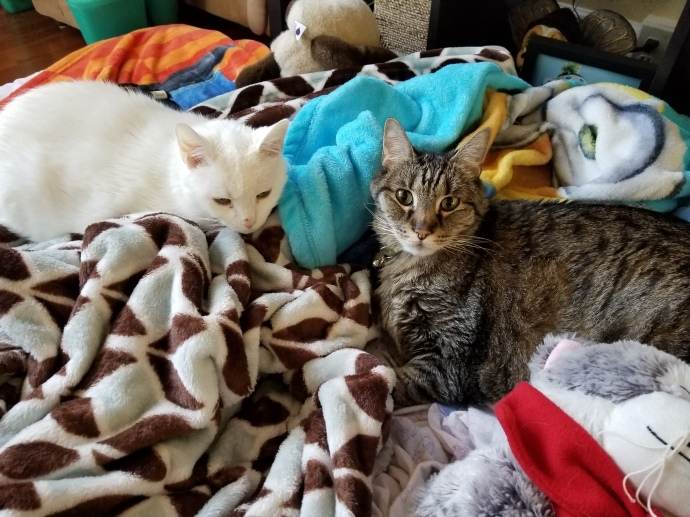 Angel and Rocky were together for almost 14 years.